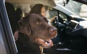 Odborník radí: Jak nadovolenou autem sdomácím mazlíčkem?
