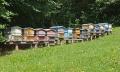 Vyzimované včelstvo