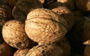 Černání ořechů