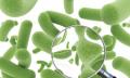 Probiotika poléčbě antibiotiky