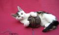Odstranění cizího tělesa zežaludku kočky