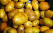 Pěstování brambor
