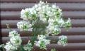 Květina nejen dovázy